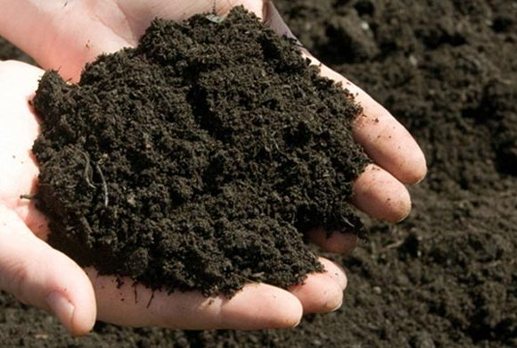 Organic matter of the soil – a factor that determines its fertility