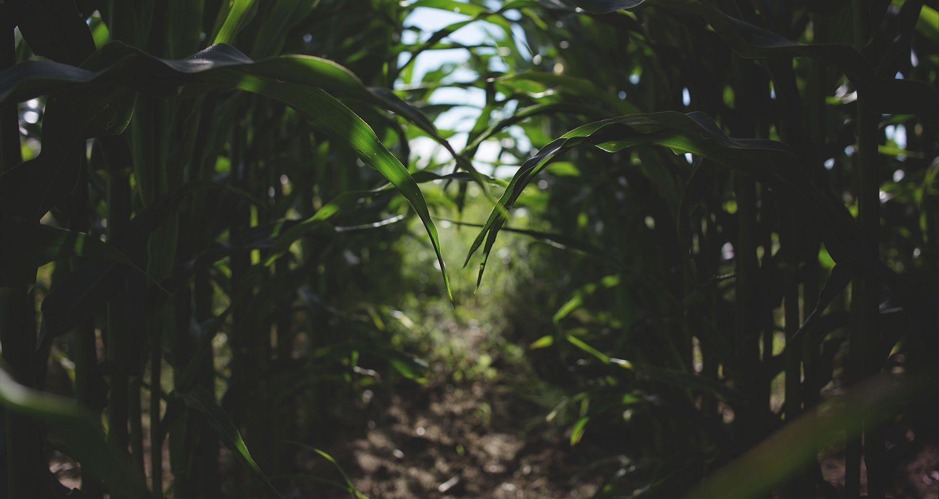 Аналіз ґрунту