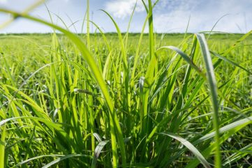 Give recommendations on fertilizer application