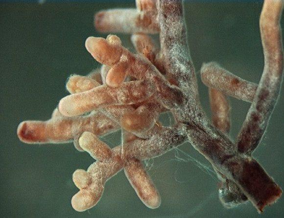Здоров'я грунту – Грунтові мікроби, органічні речовини та рециркуляція поживних речовин
