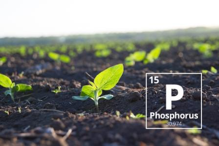 PHOSPHORUS CONTROL – DIFFERENT PATH, VARIOUS RESULTS