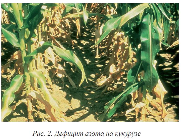 Азот - как необходимый элемент для питания растений