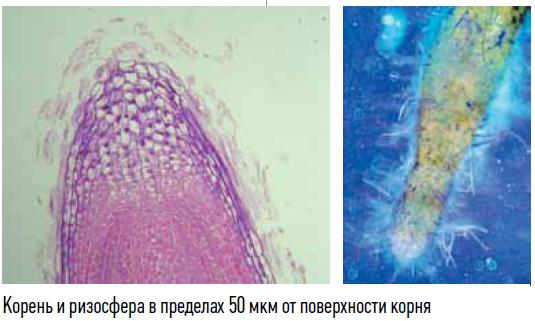 Классификация почвенных бактерий