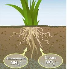 Азот — как необходимый элемент для питания растений