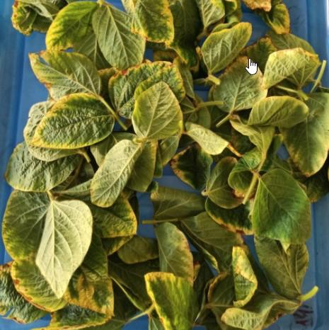 Значення калію для рослин і його вміст у грунті