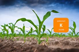 IMPORTANCE OF POTASSIUM FOR PLANTS AND ITS CONTENT IN SOIL